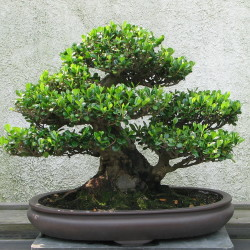 Assorted Bonsai
