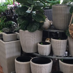 Wicker Pots